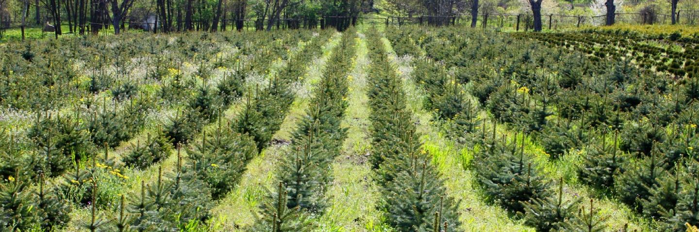 EH-GLueck-Arborist-St-Louis-MO